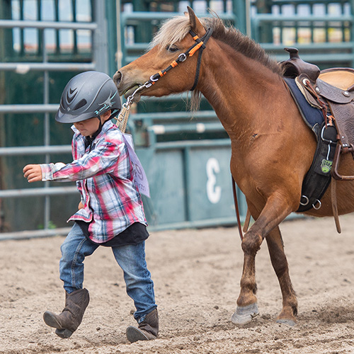 Little Britches Guiding Horse